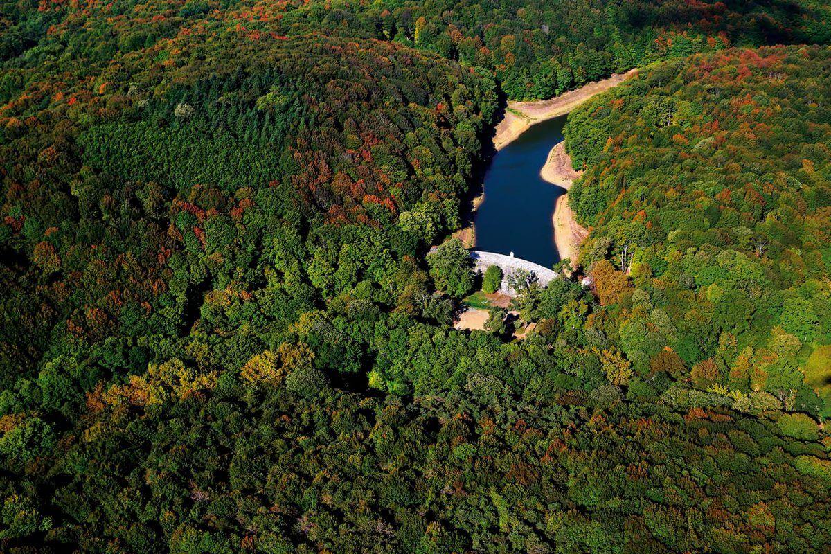جنگل بلگراد